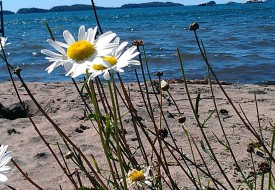 Image-beach-low-res1-275x190
